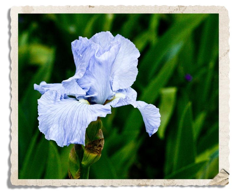 [flower-2[4].jpg]
