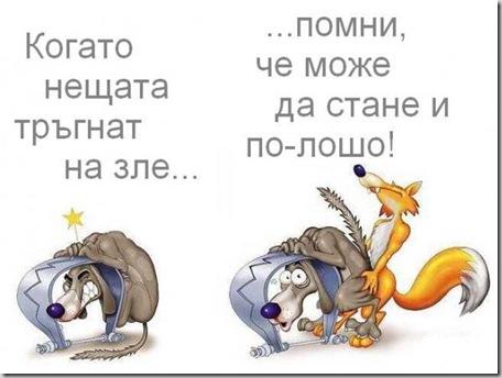 wolf&fox