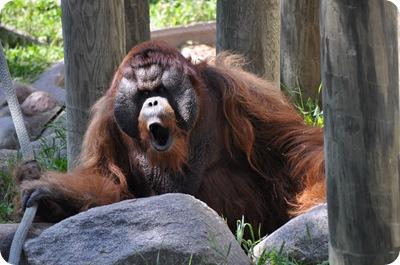 Como Zoo 075