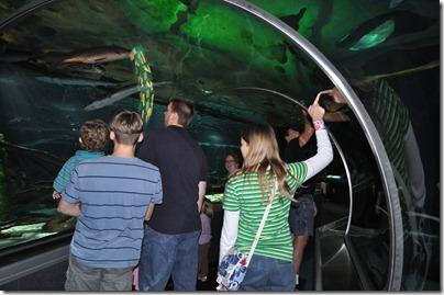aquarium 010