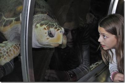 aquarium 021