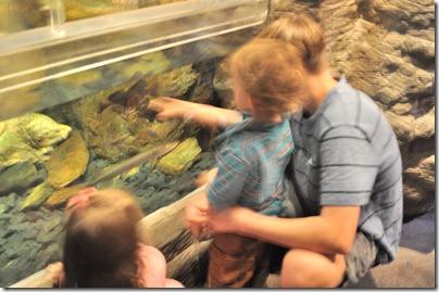 aquarium 035