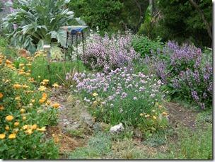Nov garden 2010 026