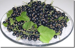 black currants 2