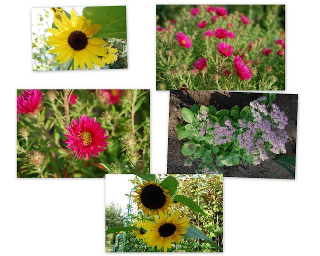 kwiatki i słoneczniki