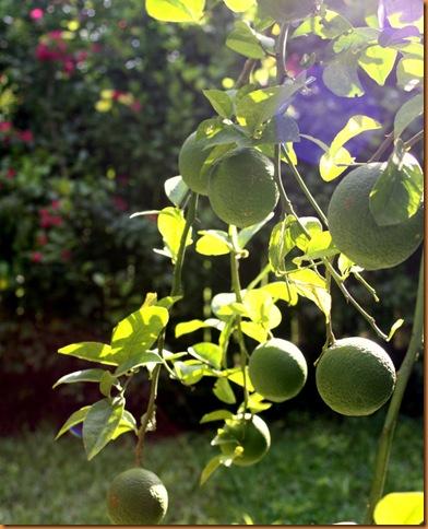 lemon 009