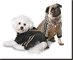 fashion dogs3 - by roberto cavalli