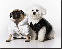fashion dogs8