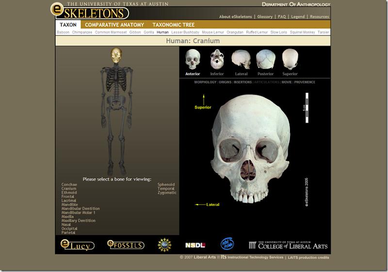 Google-Eskeletons