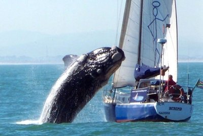whale-jumping-on-boat-in-south-africa-photos-and-youtube-video