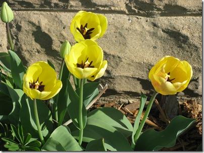 Spring2010 004