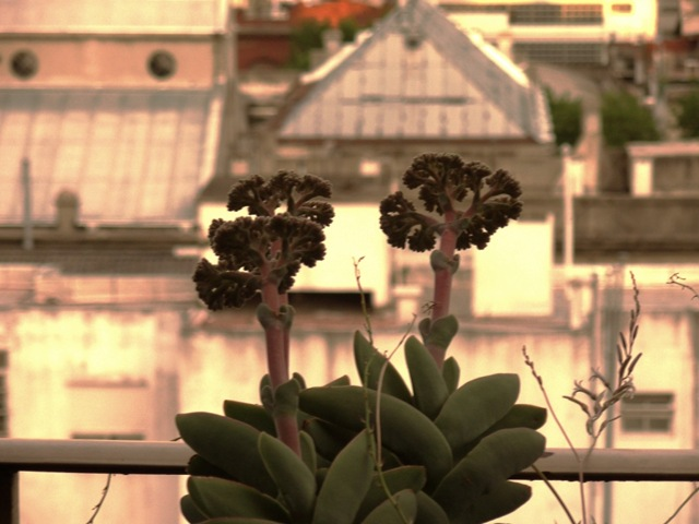 floracion año nuevo 2009 002