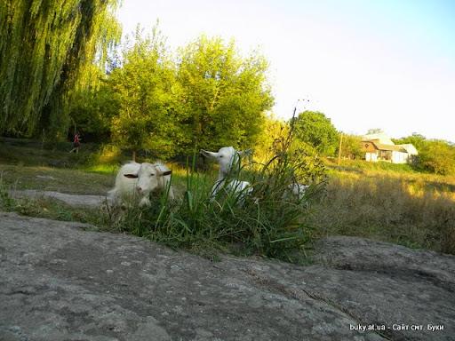 Зоопарк в Буки