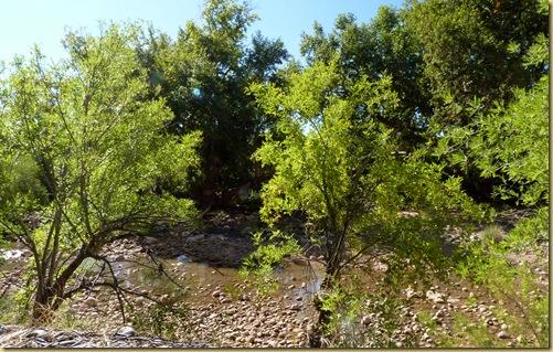 2010-09-24 - AZ, Montezuma's Castle -  1019