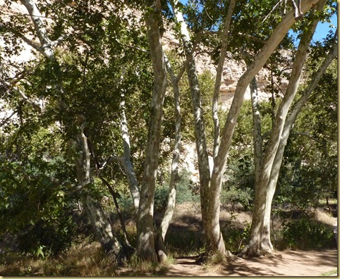 2010-09-24 - AZ, Montezuma's Castle -  1020