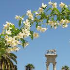 Jardines de Murillo - Sevilla -abril 2011 - 5aa.jpg