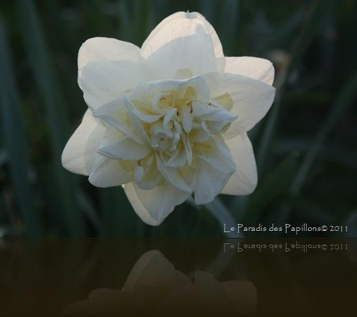 giardinomarzo2011 006
