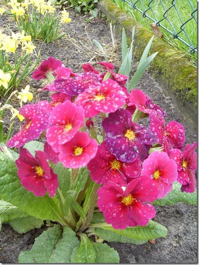 2011_04 Blumen im Garten (8)