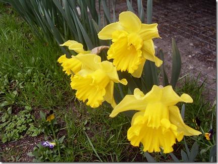 2011_04 Blumen im Garten (3)