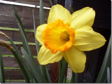 2011_04 Blumen im Garten (5)