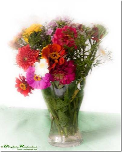 blom_20100715_vas