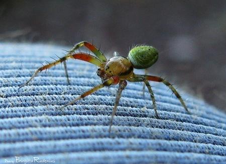 macro_spider_20090622