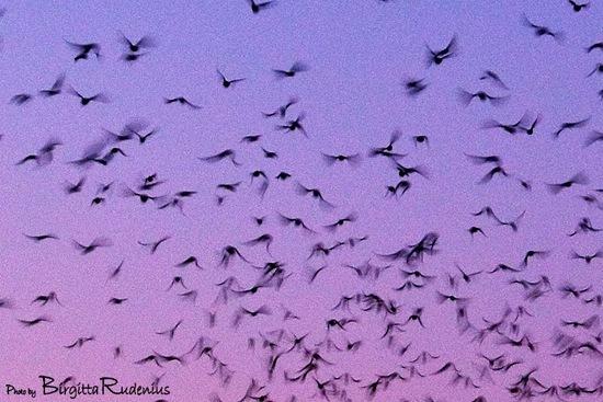 sky_20101212_tO_birds2a