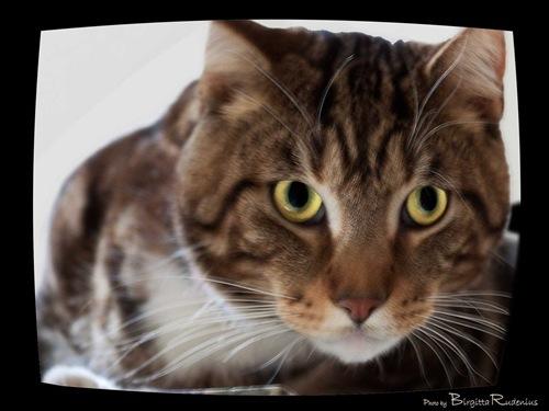 katt_20110124_mO_mans1