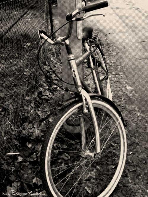 71_20110205_G9_cykel