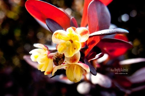 blom_20110514