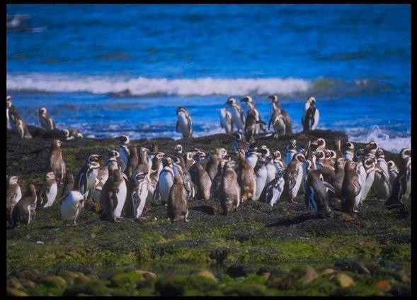 pinguinera-0156