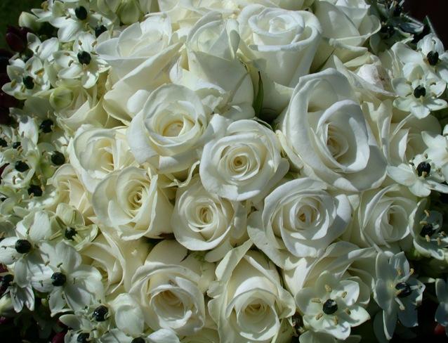 Rosasblancas1_debrujaMar