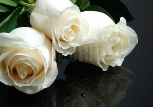 El taller de la brujaMar: Solo,Rosas blancas