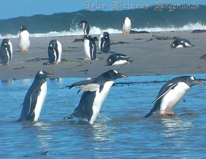 IslasMalvinas2_debrujaMar