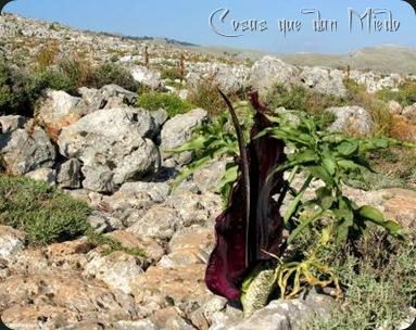 DebrujaMar-floresnegras15