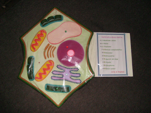 celula vegetal. celula vegetal. partes de la celula vegetal. partes de la celula vegetal.