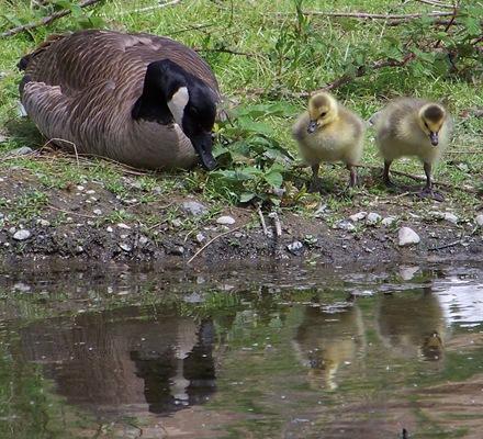 Mothergoose2babies