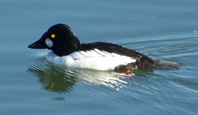 Common_GoldenEye_Blog2