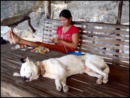 Atwayan Beach Dog