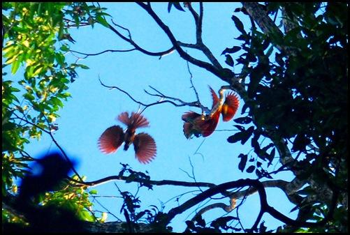 Yenwapnor Birds