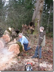 woodcutting at Woods 12