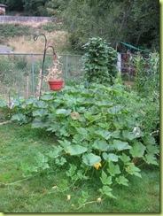 Big garden 03