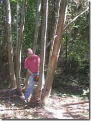 woodcutting 03