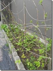 weeds 02