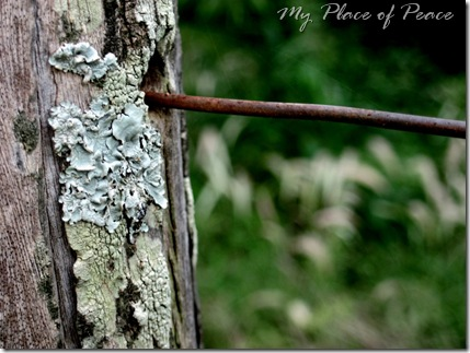 Fence Post and Spider Web Small