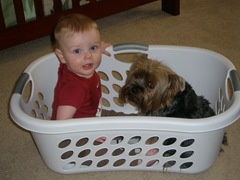 Parker and Maya in the laundry basket 2009-06-11 001