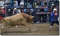 Calgary Bull