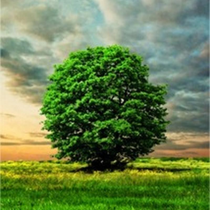 35 hermosos ejemplos de árboles, árboles y más árboles
