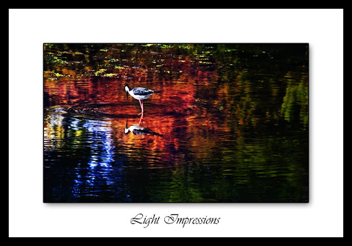 Ripples -- UCSB Lagoon