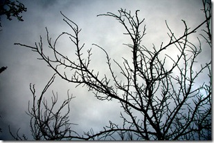 nebbia e gelo-4